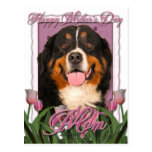 Mothers Day - Pink Tulips - Bernese Mountain Dog Post Cards
