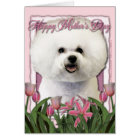 Mothers Day - Pink Tulips - Bichon Frise Card