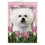 Mothers Day - Pink Tulips - Bichon Frise Greeting Cards