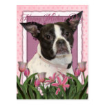Mothers Day - Pink Tulips Boston & Rat Terrier Mix Postcard