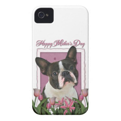 Mothers Day - Pink Tulips - Boston Terrier iPhone 4 Covers