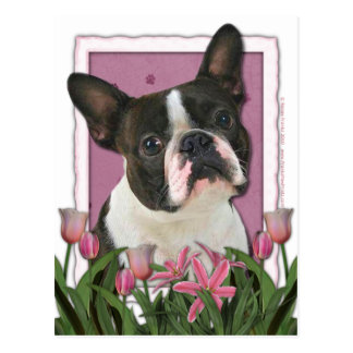 Mothers Day - Pink Tulips - Boston Terrier Post Cards