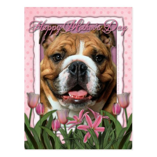 Mothers Day - Pink Tulips - Bulldog Postcard
