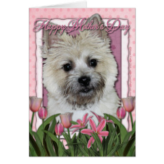 Mothers Day - Pink Tulips - Cairn - Teddy Bear Card