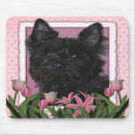 Mothers Day - Pink Tulips - Cairn Terrier - Rosco Mousepads