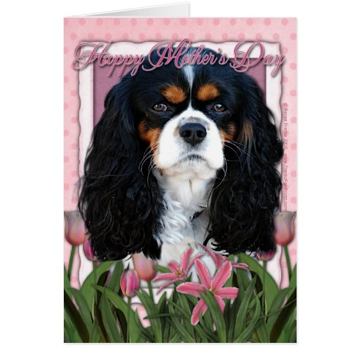 Mothers Day - Pink Tulips - Cavalier - Tri-Color Greeting Card