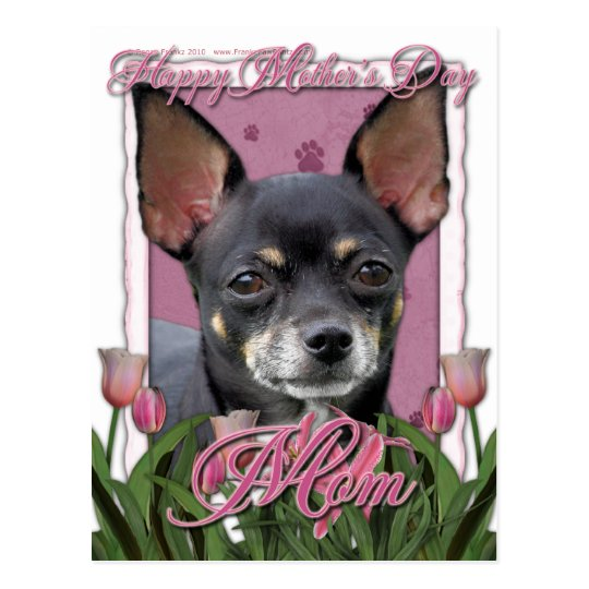 Mothers Day - Pink Tulips - Chihuahua - Isabella Postcard