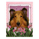 Mothers Day - Pink Tulips - Collie - Natalie Postcard