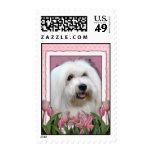 Mothers Day - Pink Tulips - Coton de Tulear Postage Stamps