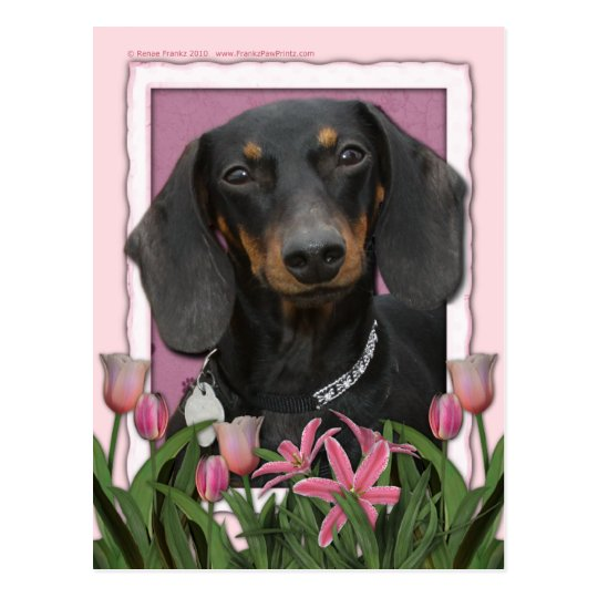 Mothers Day - Pink Tulips - Dachshund - Winston Postcard