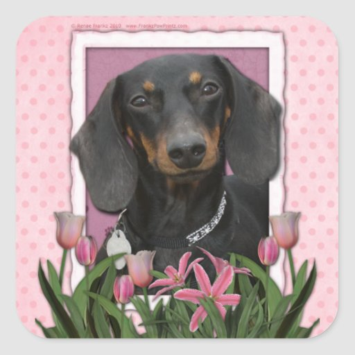Mothers Day - Pink Tulips - Dachshund - Winston Square Sticker