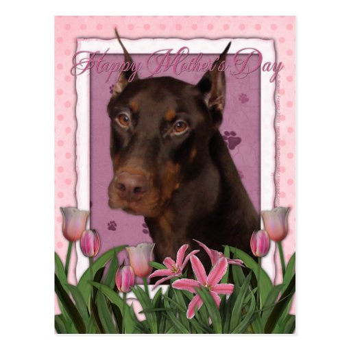 Mothers Day - Pink Tulips - Doberman - Red - Rocky Postcard