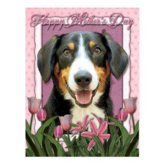 Mothers Day - Pink Tulips Entlebucher Mountain Dog Postcard