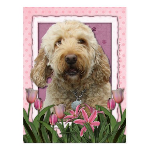 Mothers Day - Pink Tulips - GoldenDoodle Post Cards