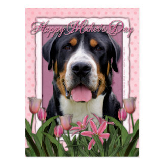 Mothers Day Pink Tulips Greater Swiss Mountain Dog Postcard