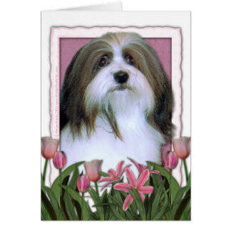Mothers Day - Pink Tulips - Havanese Card