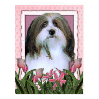 Mothers Day - Pink Tulips - Havanese Postcard