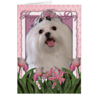 Mothers Day - Pink Tulips - Maltese Cards