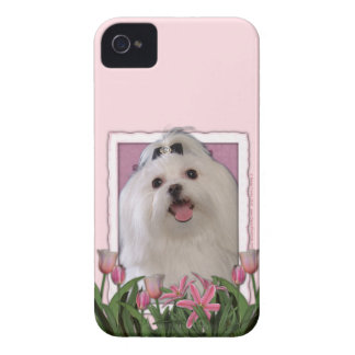 Mothers Day - Pink Tulips - Maltese iPhone 4 Case