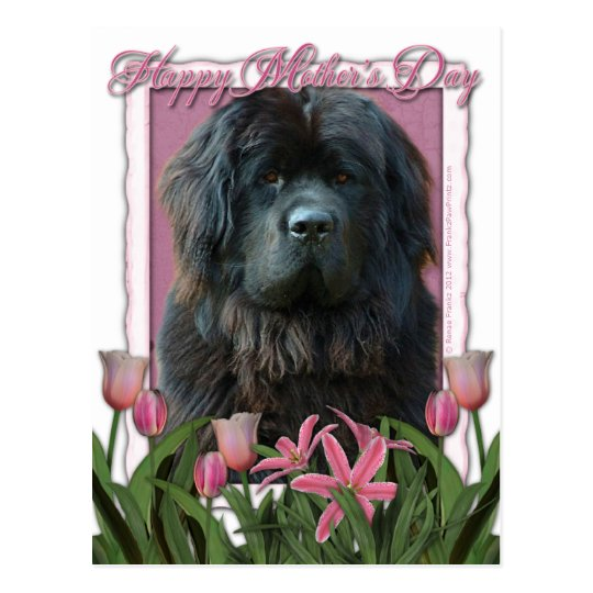 Mothers Day - Pink Tulips - Newfoundland Postcard