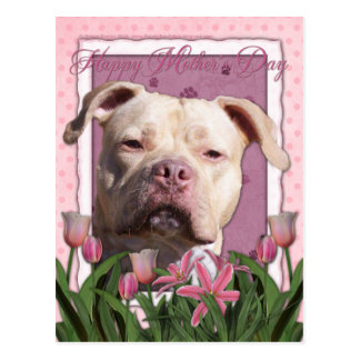 Mothers Day - Pink Tulips - Pitbull - Jersey Girl Post Cards