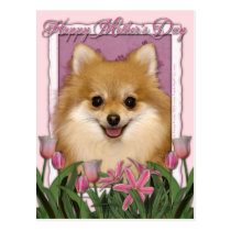 Mothers Day - Pink Tulips - Pomeranian Postcard