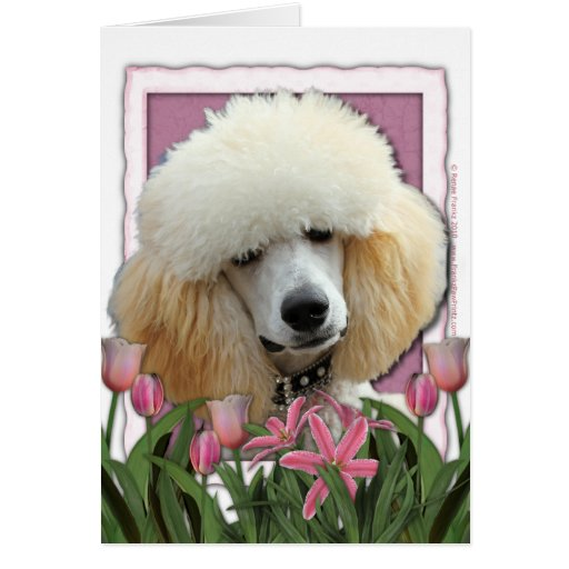 Mothers Day - Pink Tulips - Poodle - Apricot Card