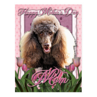 Mothers Day - Pink Tulips - Poodle - Chocolate Postcard