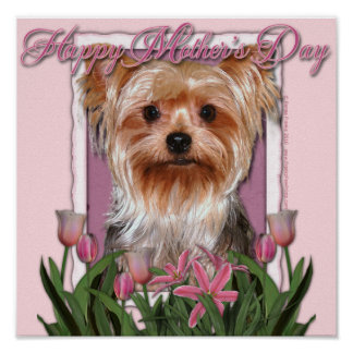 Mothers Day - Pink Tulips - Yorkshire Terrier Poster