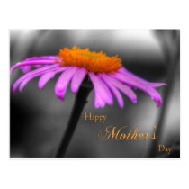 Mothers Day Purple and Orange Coneflower Postcard