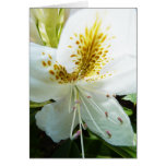 Mother's Day Rhody Greeting Card