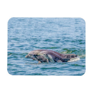 Mother's Love Dolphin & Baby Magnet