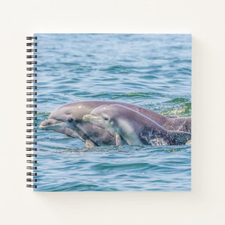 Mother's Love Dolphin & Baby Notebook