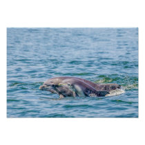 Mother's Love Dolphin & Baby Poster