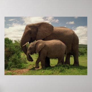 Mother's Love - Elephants Poster