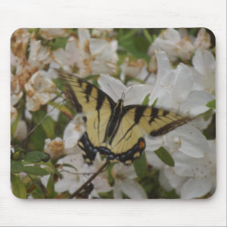 Mothers Love Tiger Swallowtails Mouse Pad
