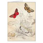 Moths and Butterflies Cards