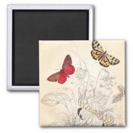 Moths and Butterflies Fridge Magnet
