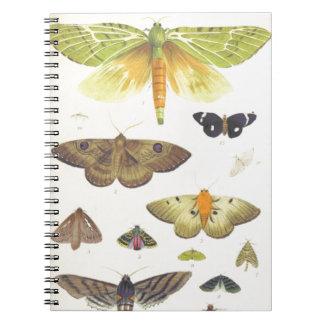 Moths and Butterflies of New Zealand Spiral Notebook