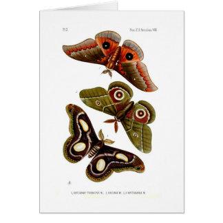 Moths Card