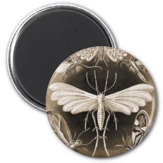 Moths Magnet