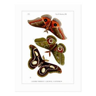 Moths Post Card