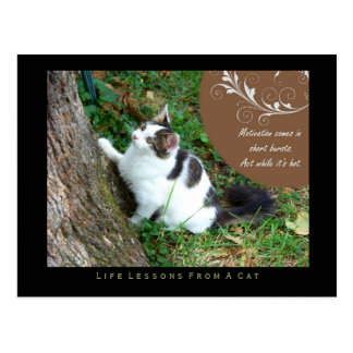 Motivation Life Lessons From a Cat Postcard