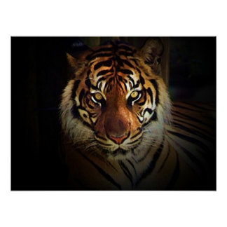 Motivational Eyes of Tiger in Shadow Poster Print