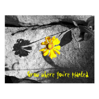 "Motivational ""Grow where you're planted"" Postcard"
