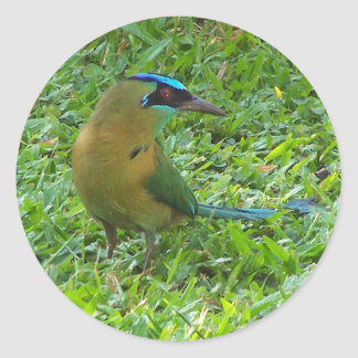 Motmot Azul-coronado Pegatina Redonda