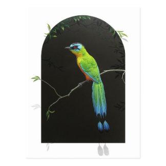 Motmot Azul-coronado Postal