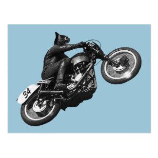 motocicleta divertida del vintage del gato tarjetas postales