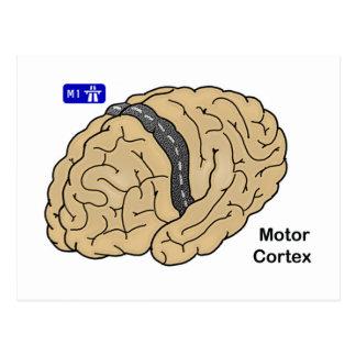 Motor Cortex Postcard