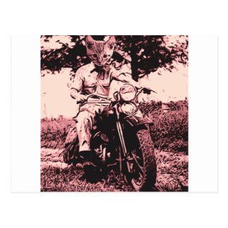 Motorcycle cat postcard